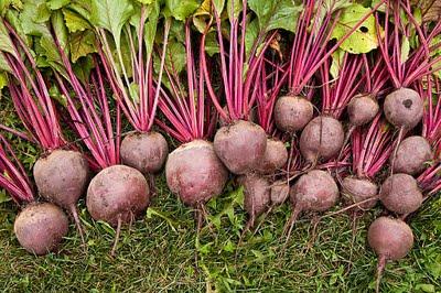 beetroot-plantz